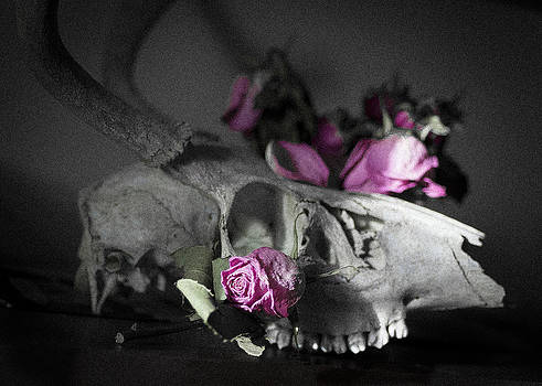 Ronda Broatch - Still Life with Skull and Pink Roses
