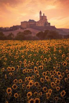 Still Morning Tuscany 2031571-008 by Jimmy Williams