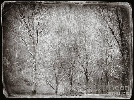 Stillness by Chris Armytage