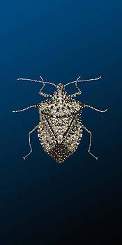 Stink Bug i Phone Case by R  Allen Swezey
