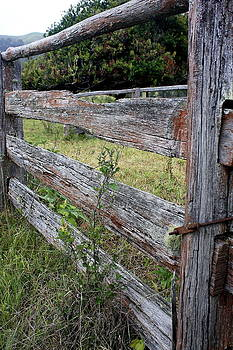 Stockyard fence by Ian  Ramsay