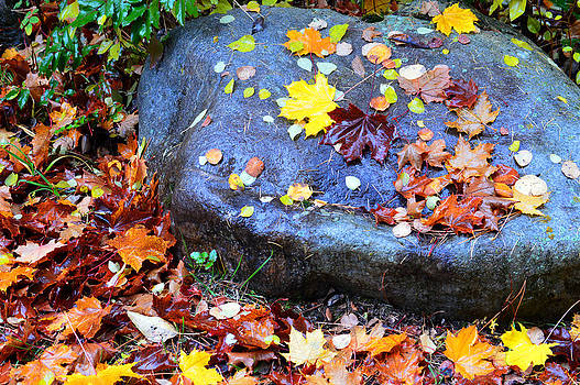 Stone and Leaf by J Foster Fanning