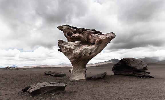 Stone Tree by Pedro Nunez