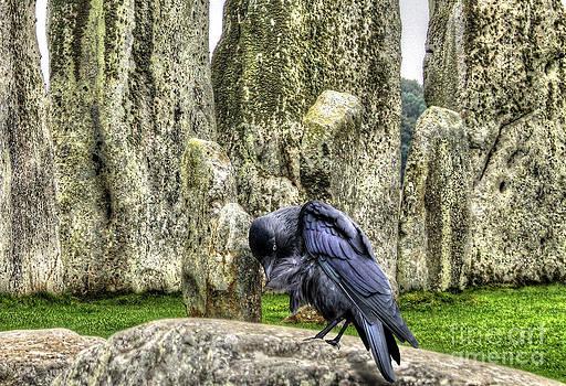 Stonehenge Crow by Skye Ryan-Evans