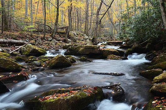 Stony Creek by Jamie Pattison