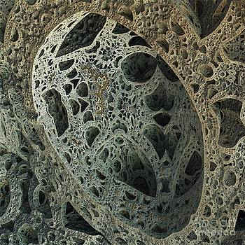 Stony lace by Bernard MICHEL