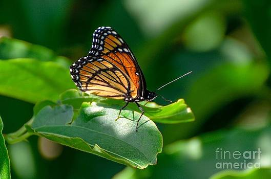 Stopping for a moment by Debbie Patrizi