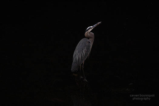 Stork by Carven Boursiquot
