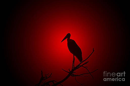 Hermanus A Alberts - Stork Red and Nature Beauty