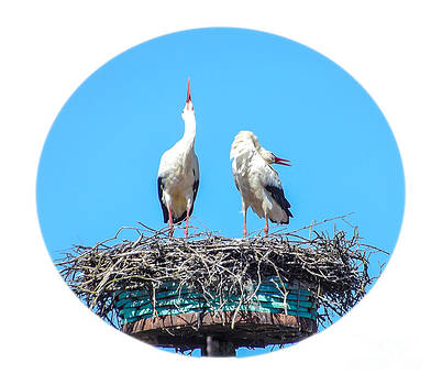 Algirdas Lukas - Storks in early spring 1