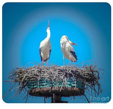 Algirdas Lukas - Storks skreem 2