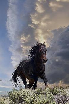 Storm by Jana Thompson