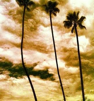 Storm palms  by Natalya Karavay