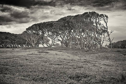 Storm Trees by Chris Brehmer Photography