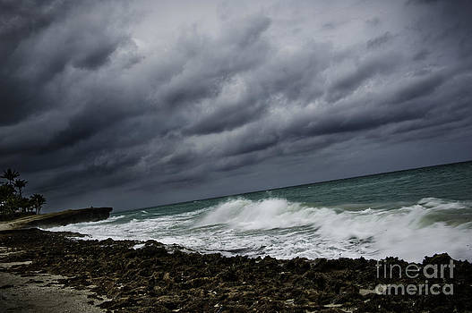 Stormy by Audrey Wilkie