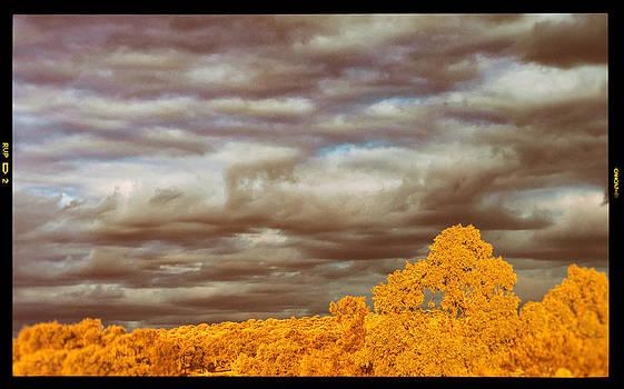 Stormy Bush by Ross Carroll