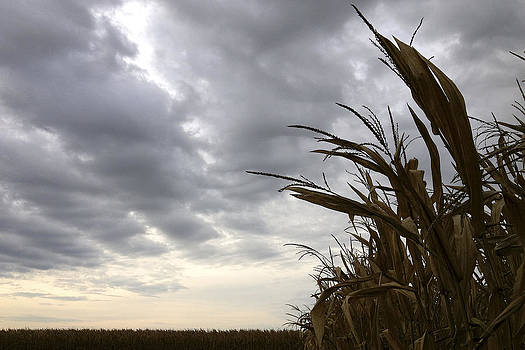 Daniel Kasztelan - Stormy Corn