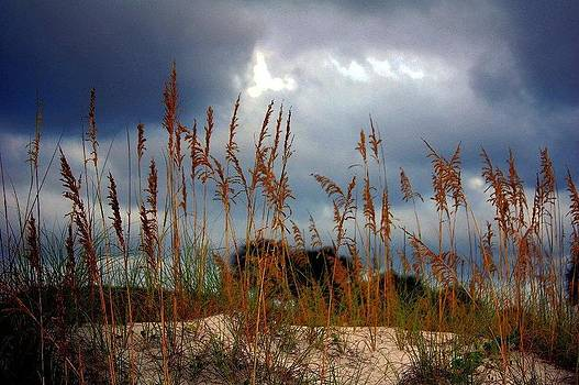 Stormy Sea Oats by Karsun Designs Photography