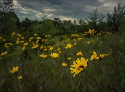 Ray Van Gundy - Stormy Sky over Sunflowers