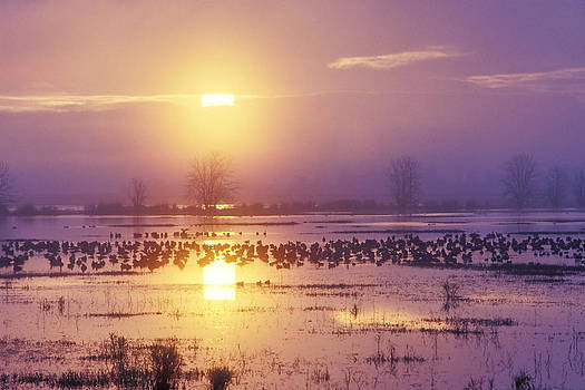 Stormy Sunrise on Wetlands by Thomas Chamberlin