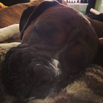 Straight Up Pooped! #snuggles #adopted by Samantha Rash