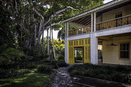 Lynn Palmer - Strangler Fig and Plantation Home