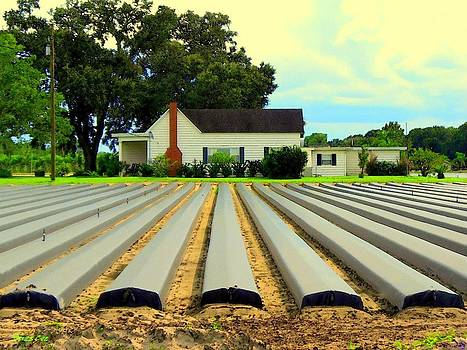 Buzz  Coe - Strawberry Farm Planting Time in Plant City