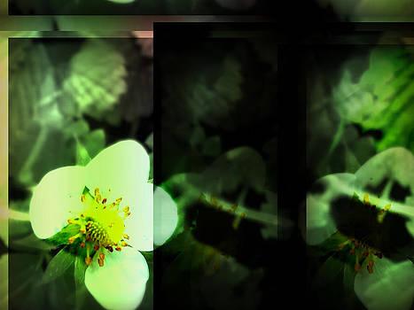 Strawberry Flower by Raquel Ventura