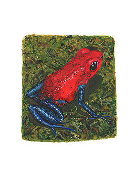 Strawberry Poison Dart Frog by Cindy Hitchcock
