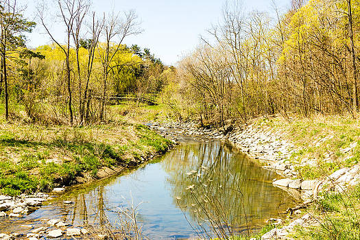 Stream and trees.   by Tibor Co