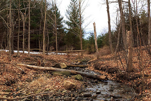 Stream in forest. by Tibor Co