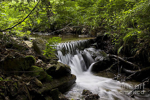 Stream in the forest by Janique Robitaille