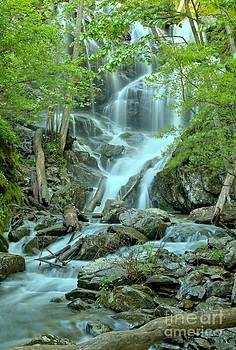Adam Jewell - Streams Through The Trees