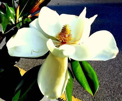 Buzz  Coe - Street Magnolia
