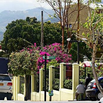 #streets #sanjose #costarica #trees by Kayla  Pearson