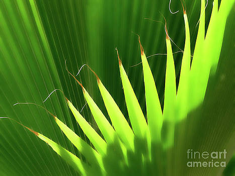 Stringy Palm by Vicki Hone Smith