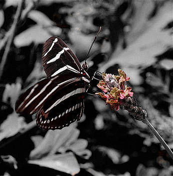 Striped Butterfly by Michael Molumby