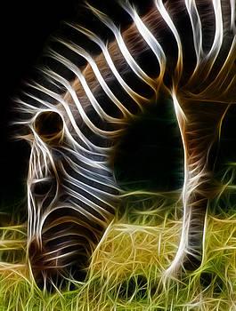 Ricky Barnard - Striped Fractal