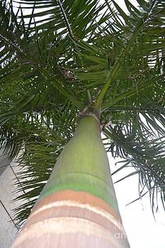Striped Palm by Wayne Pellenberg