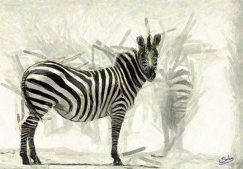 Striped Stallion  by Francisco Sanchez Salas