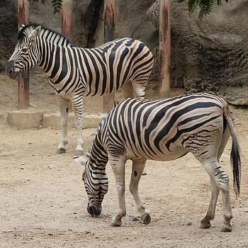 Stripes by Amanda Leigh