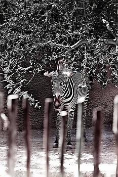 Stripes by Jeff  Jacobson