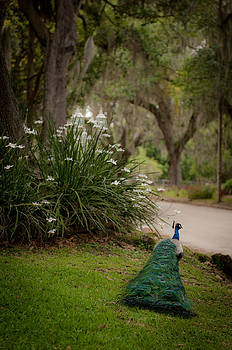 Stroll thru the park by Becky Eastham