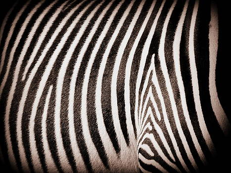 Ramona Johnston - Study in Stripes Number Three