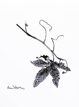 Study of leaf in ink by Zuzana Vass