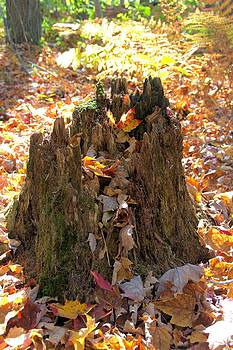 Valerie Kirkwood - Stump and Autumn Leaves