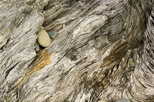 Stump and Stone Abstract by Peter J Sucy