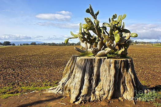 Stumped by Shannan Peters