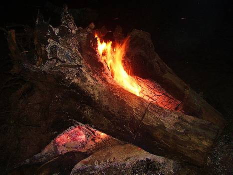 Stumps Glow by Fawn Whelahan