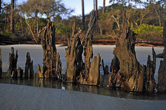 Stumps on the Beach 1.2 by Bruce Gourley
